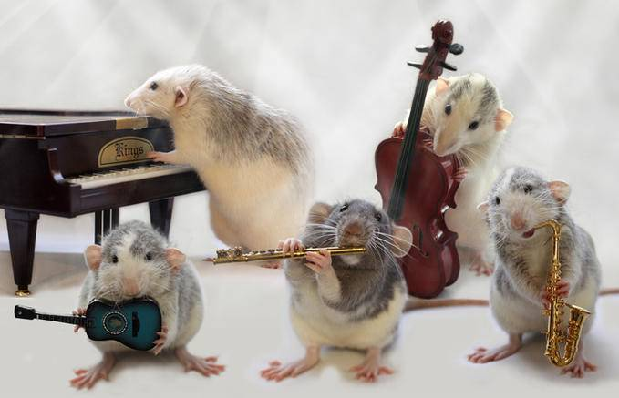 Mice playing instruments in a band