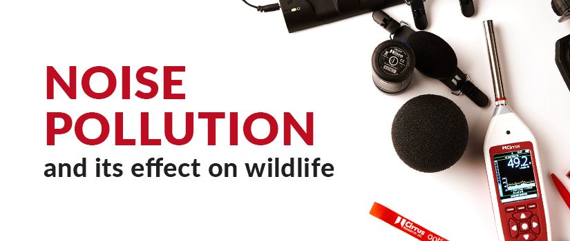 Noise Pollution and its effect on wildlife